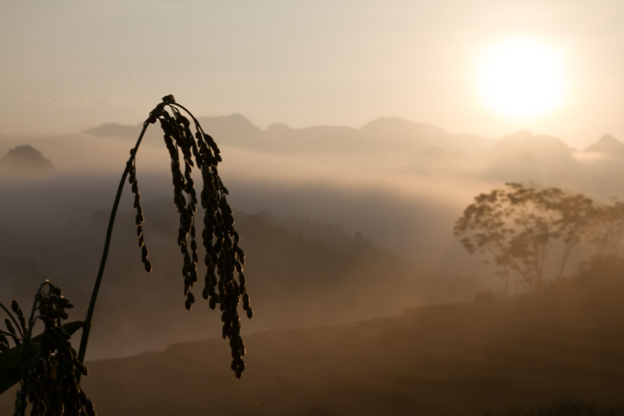Photography tours to Pu Luong and capture scenery at dawn