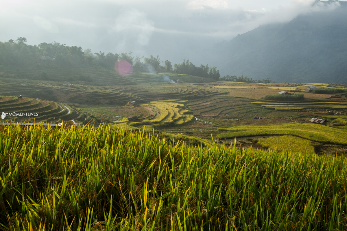 Sunrise over the rice field