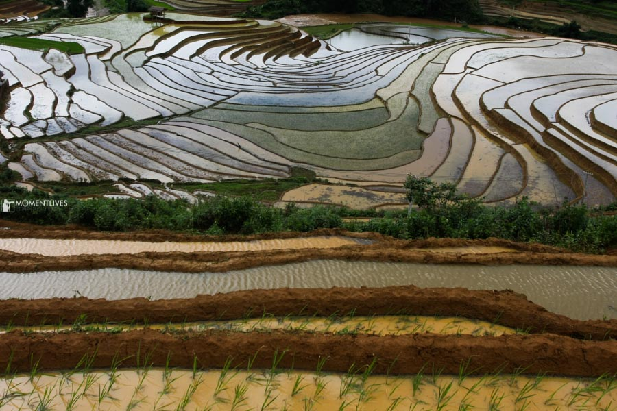 Water reflection in the rice field