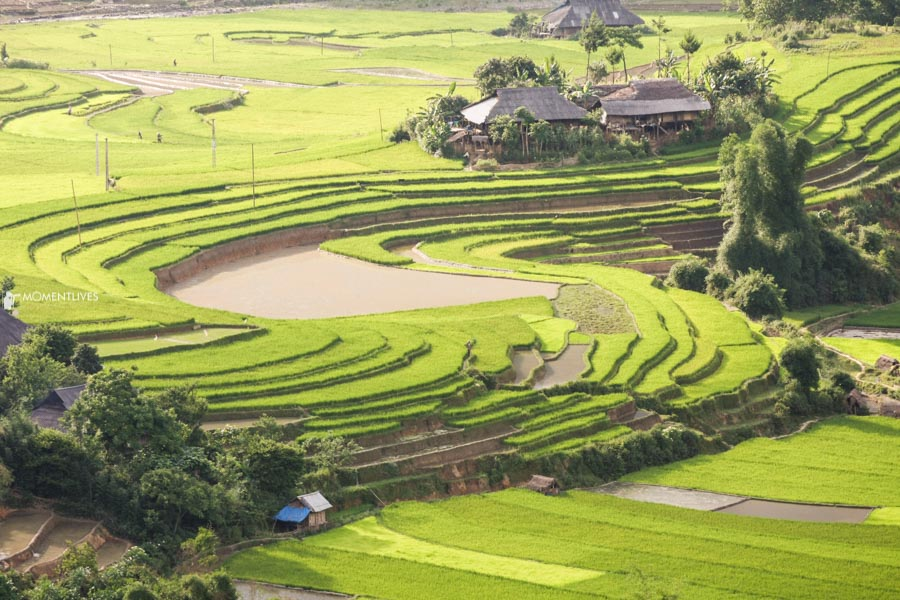 Rice growing season in north Vietnam