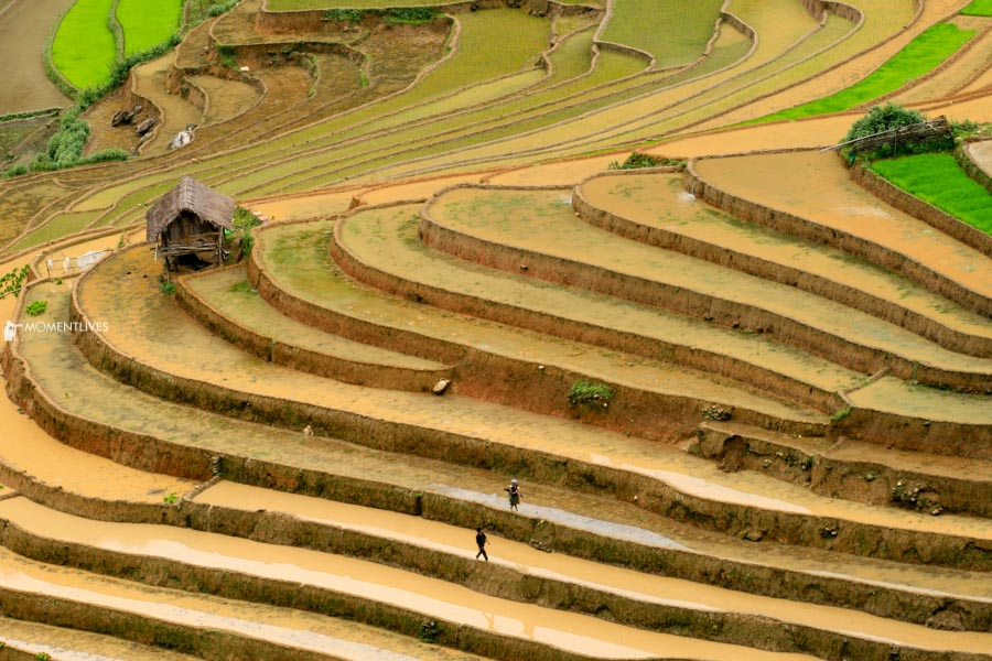Photo tour capturing the beauty of rice terraces