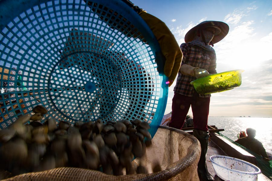 Harvesting clams in Nam Dinh province