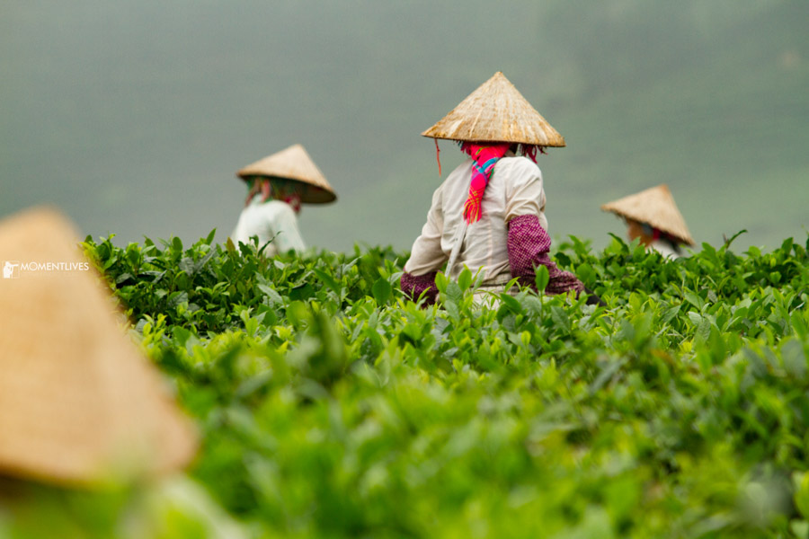 Ladies in conical hats in the mountains of Vietnam