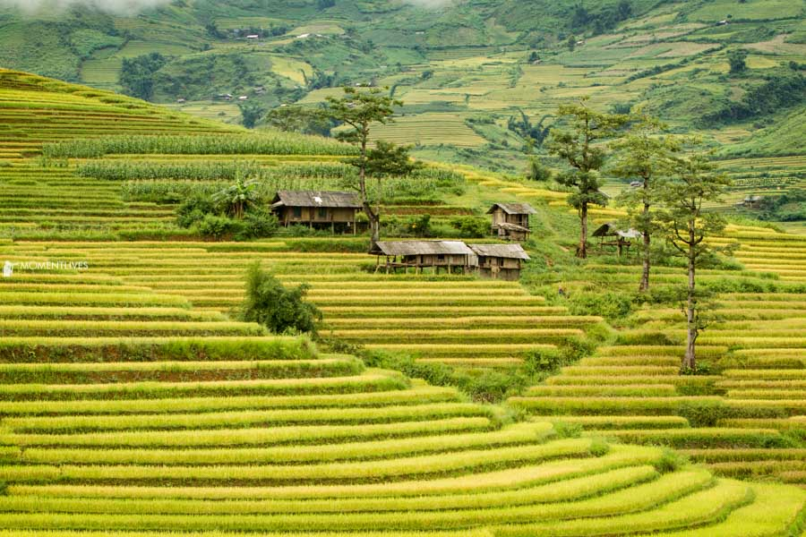 Lines of rice terraces during photo tour