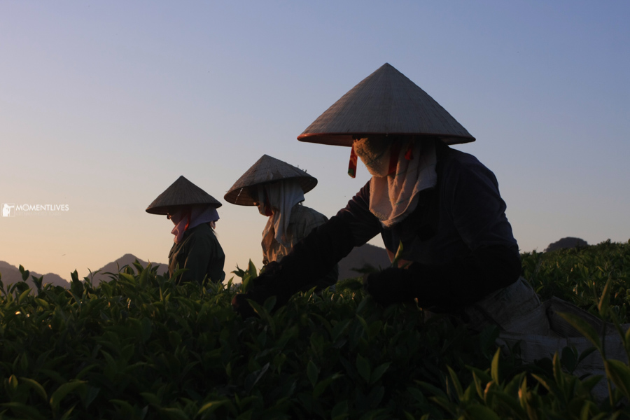 Ladies picking up tea leaves who we met on our photo tour