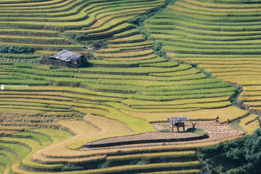 Photo tour to capture the beauty of rice terraces of Muong Hum