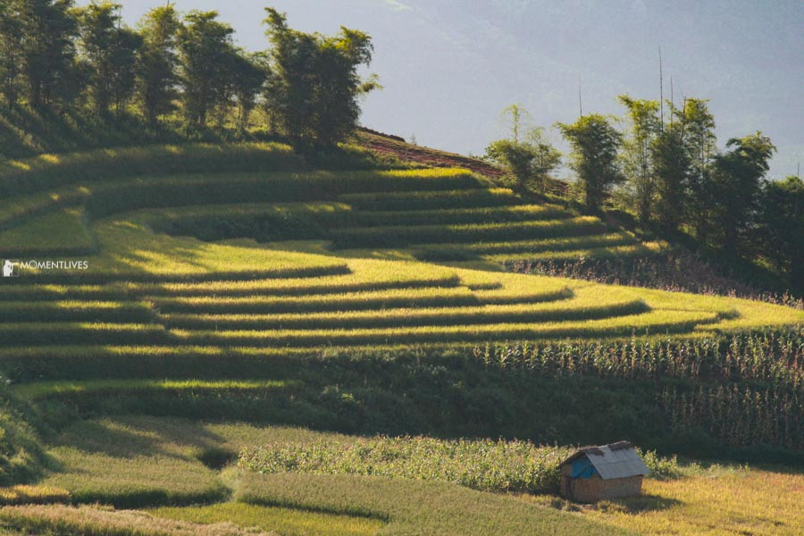 Photography of rice terraces in northern Vietnam