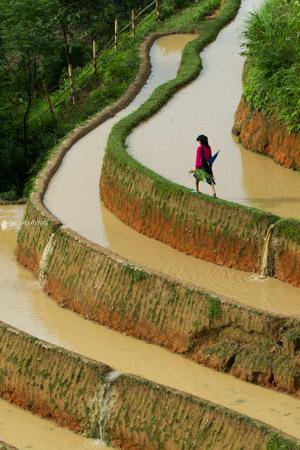 Hoang-Su-Phi-terraces