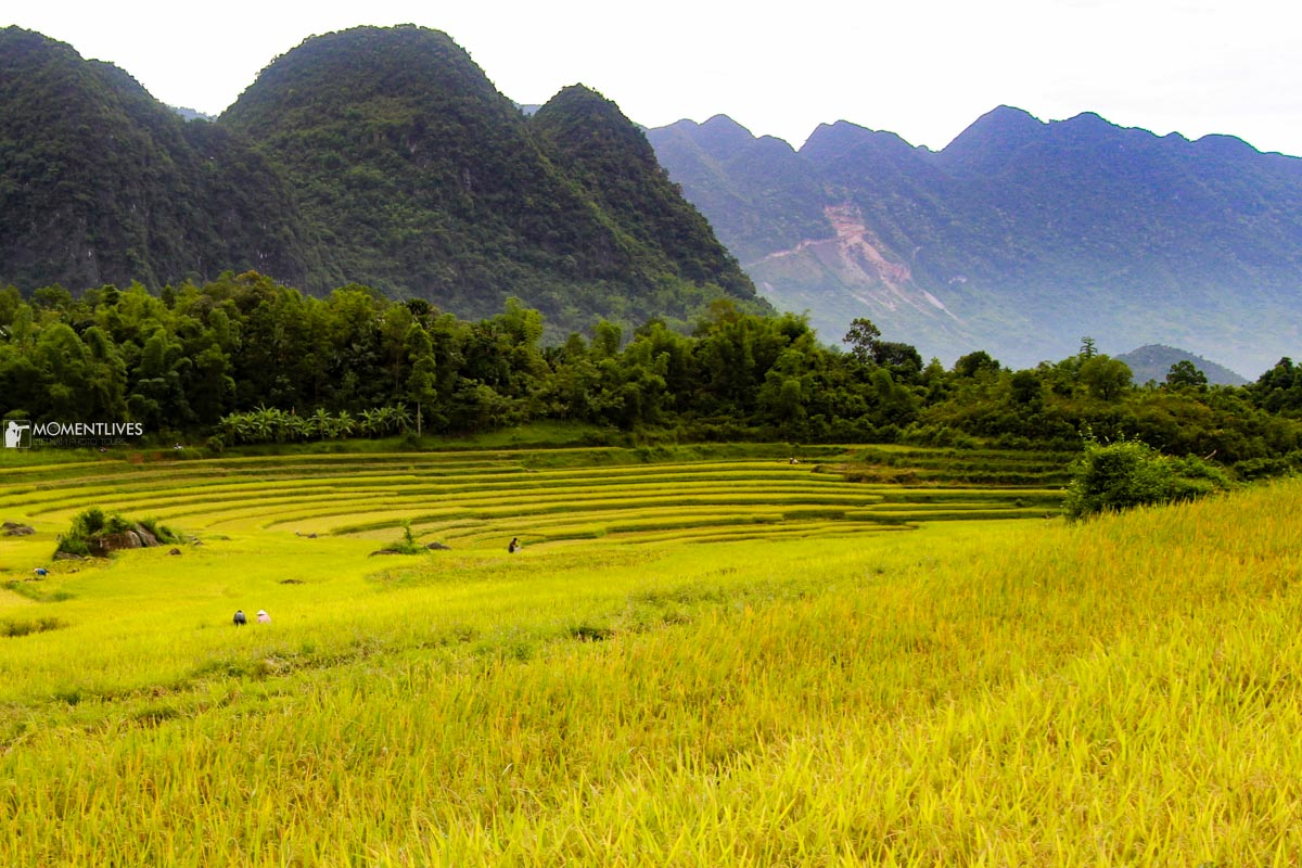 Travel to Pu Luong with Momentlives