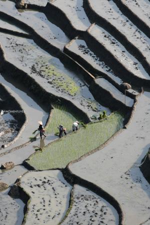 Rice-transplanting