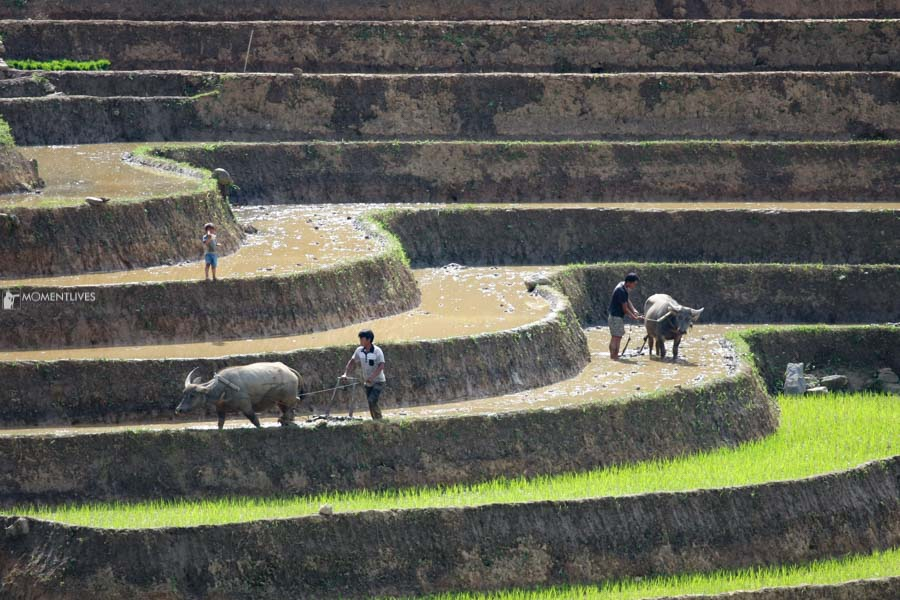 Local people grow rice in Y Ty