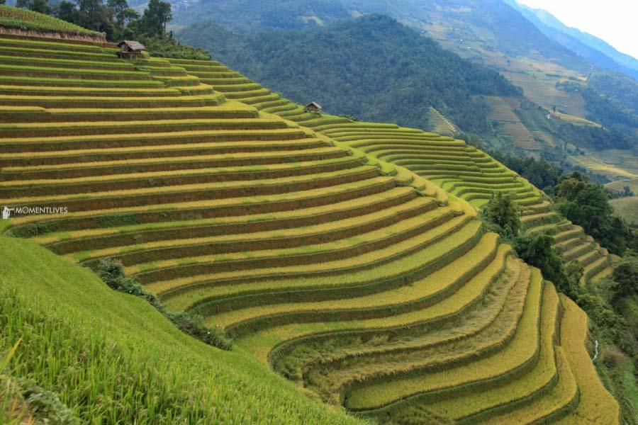 Cascading rice field in Vietnam