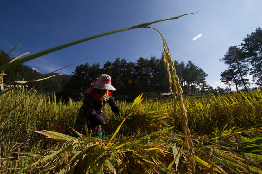 Photo tours to see rice terraces of Mu Cang Chai