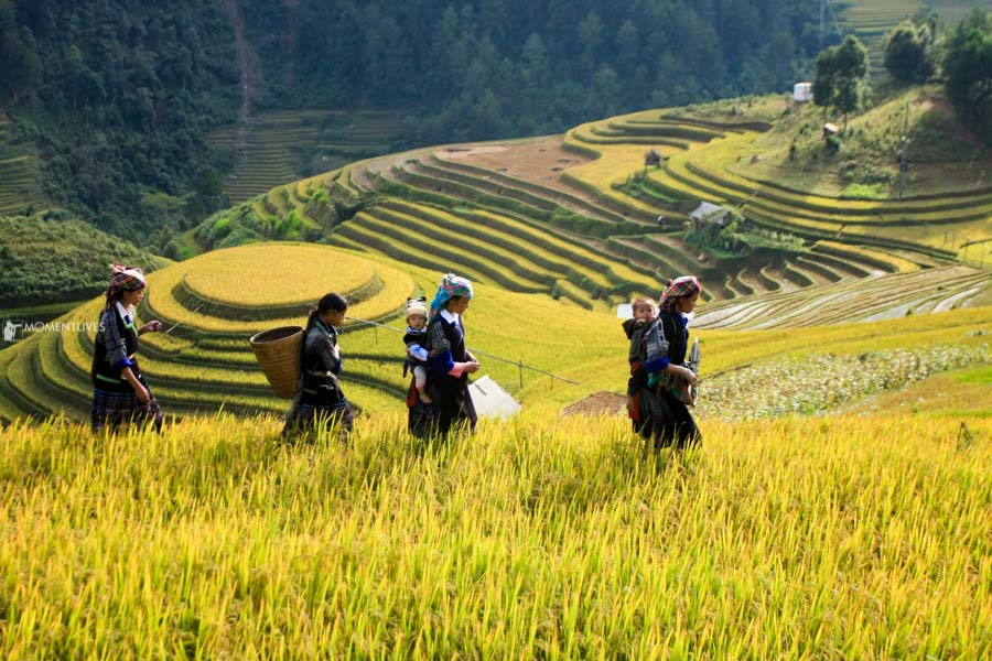 Scenery of Mu Cang Chai