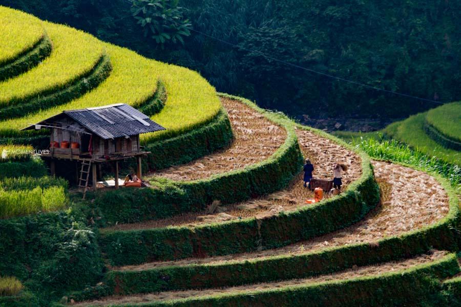 Scenery in Mu Cang Chai, Vietnam