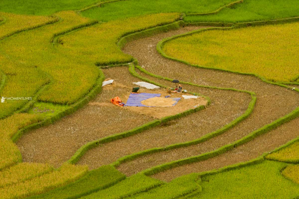 Lines of rice terraces of Mu Cang Chai, Vietnam