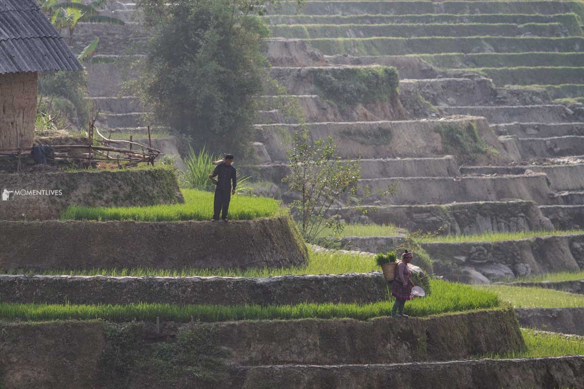 The rice terraces in Y Ty