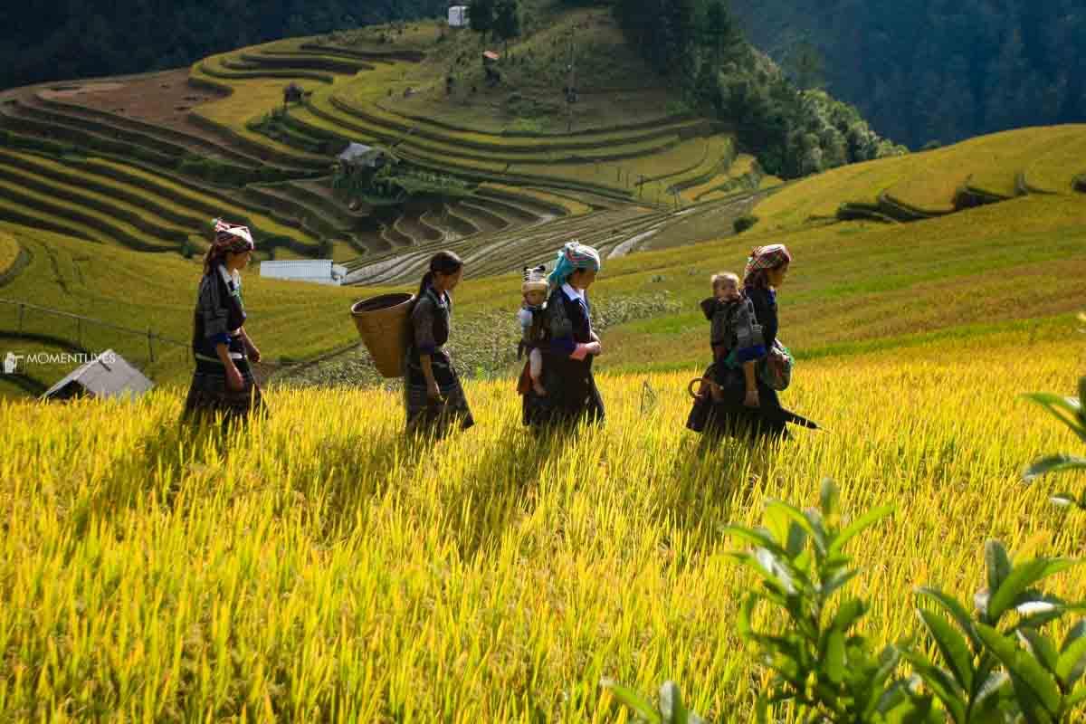 Photogenic landscape of Mu Cang Chai