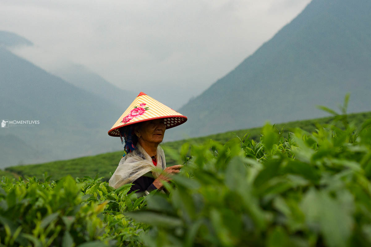 Photography tour capturing scene at tea plantation in Vietnam