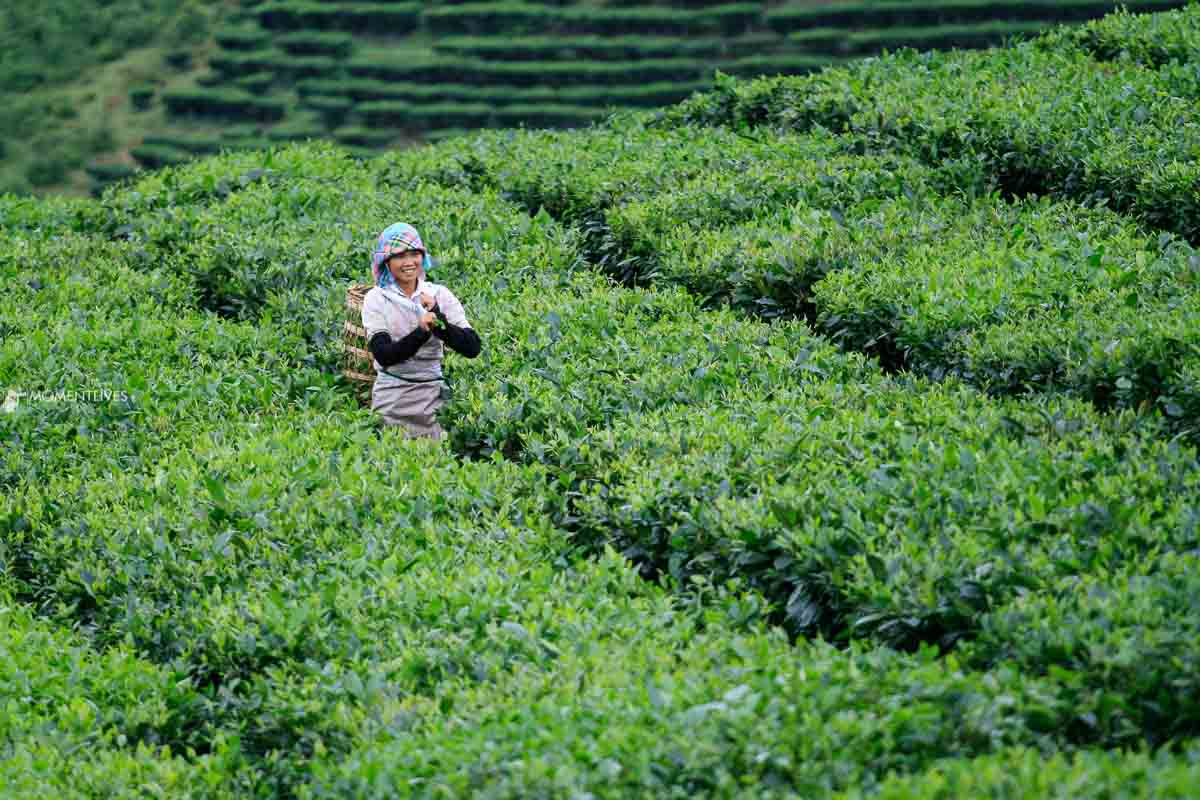 Photography tour to a tea plantation in Vietnam