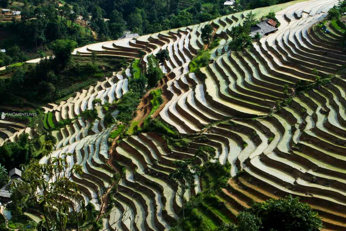 Rice terraces in Hoang Su Phi, Ha Giang, Vietnam