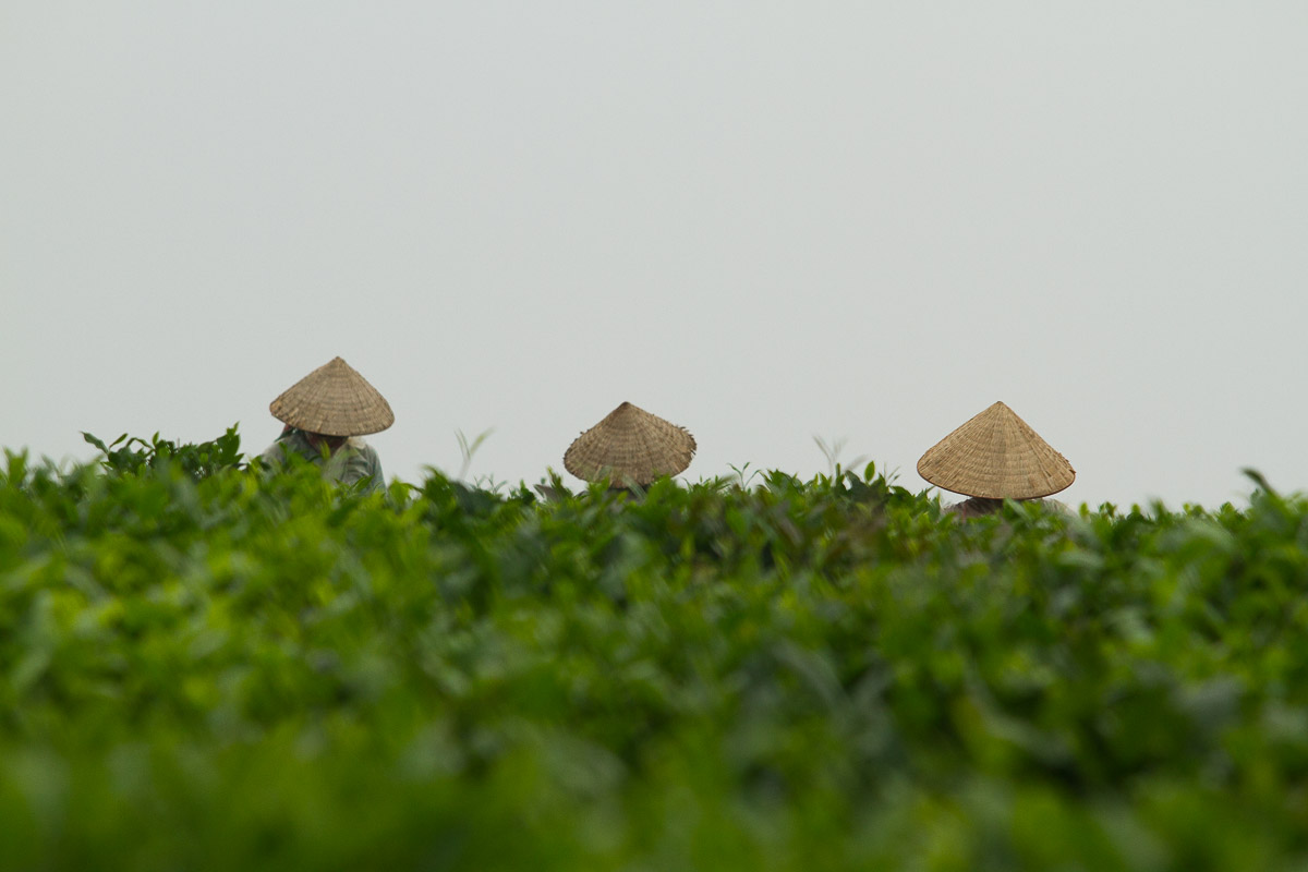 Conical hats of Vietnamese workers in Thac Ba lake where we have our photography tour