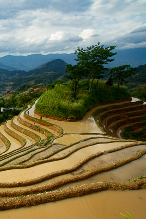 Ha-Giang-rice-terraces