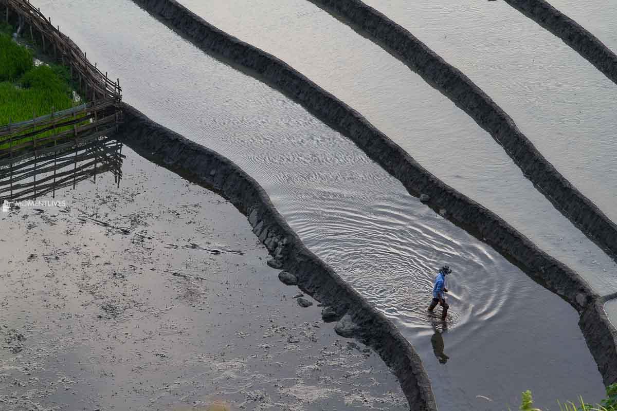 Rice terraces in Muong Hum, Vietnam