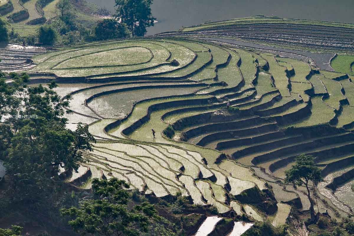 Photography to Muong Hum at rice growth time