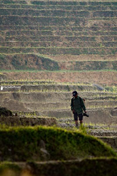 Rice growing season Vietnam photography tour