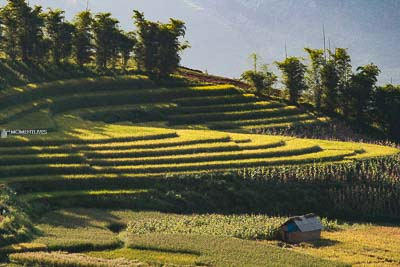 Photo of the rice terrace in Y Ty